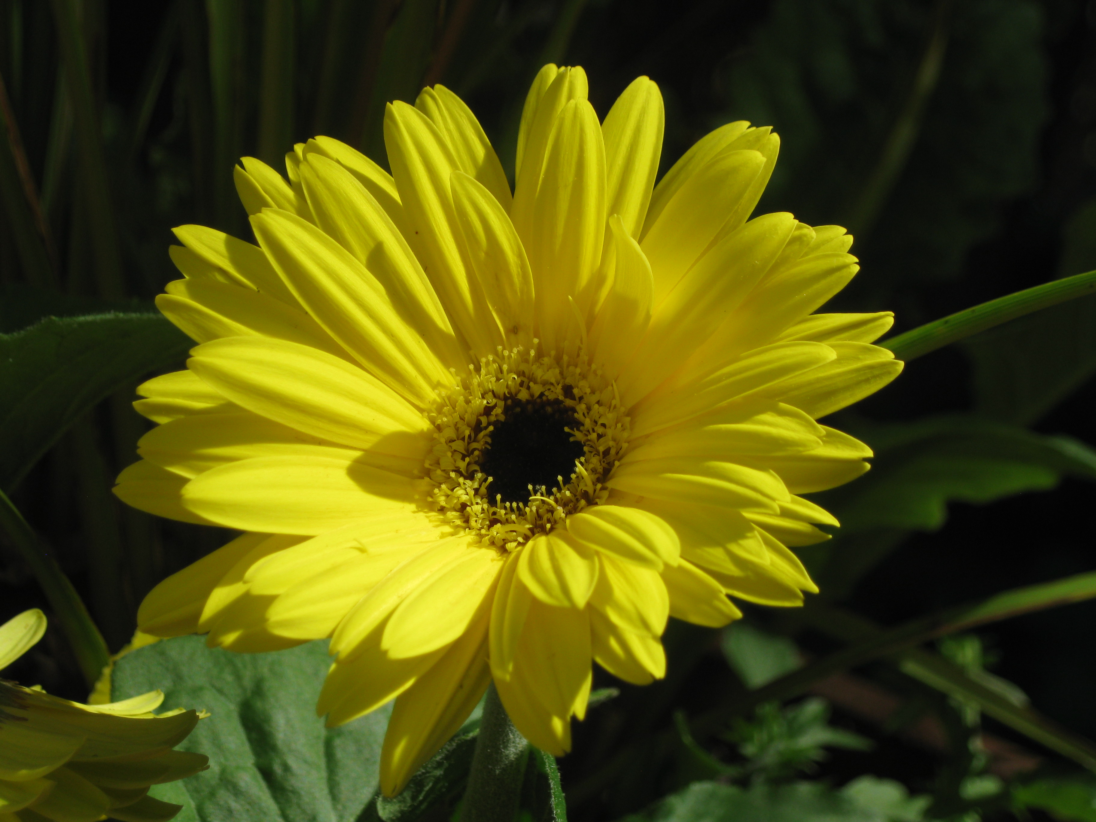 Friendship flower pics - Flowers that mean friendship ...